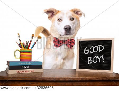 studio shot of a cute dog on an isolated background (BOOK TITLES ARE DIGITALLY MADE UP)