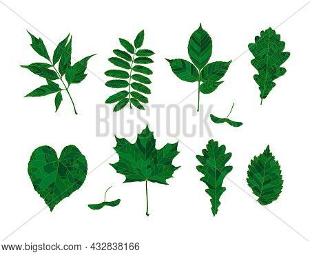 Set Of Hand Drawn Green Silhouettes Forest Leaves - Maple, Maple Seeds, Ash-leaved Maple, Rowan, Ash