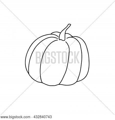 Pumpkin Hand Drawn Vector Outline Doodle Illustration Vegetable For Seasonal Autumn Holidays Celebra