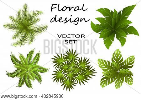 Top View Of Green Leaves.colored Vector Illustration With Bushes From Leaves On A White Background.