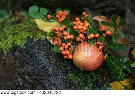 Autumn Fruits, Red Apple And Berries From Firethorn Lying On Dark Wet Ground Between Moss And Leaves