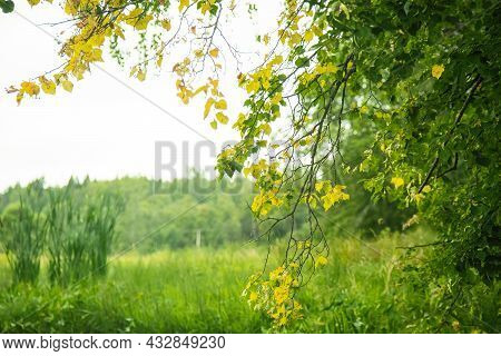 Green Summer Forest Landscape At Daytime With River.