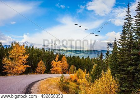 Magnificent mountain road among coniferous forests and orange autumn aspens. Flock of migratory birds flies to dark lands. The Rocky Mountains of Canada. Indian summer in Jasper Park.