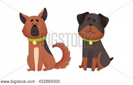 Funny Shepherd Dog And Rottweiler With Collar As Four-legged Friend And Domestic Pet Vector Set
