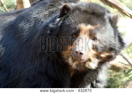 black bear having fun poster