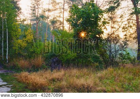 Scenic Autumn Forest During Sunrise. Morning Sunlight View. Sun Rays Shine Through Trees With Colorf
