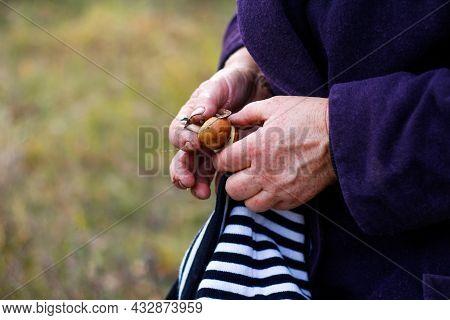 Defocus Brown Mushrooms (suillus) In Female Hands. Picking Mushrooms. Autumn Forest. Autumn Inspirat