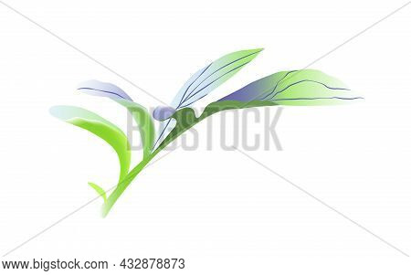 Leave Off Cornflowers Isolated On Wihite Background.
