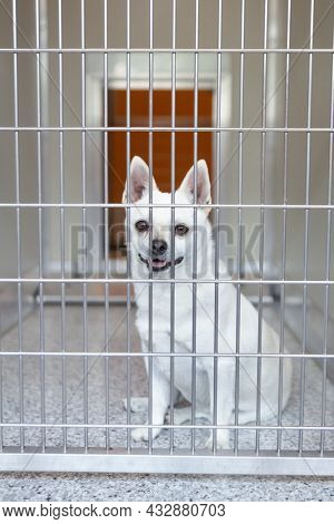chihuahua in a kennel at a shelter