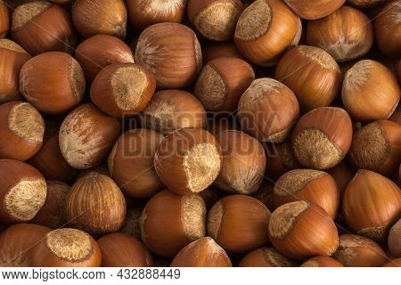 Hazelnut. Food Background. Hazelnut Background (nuts In Shell) In Natural Brown Neutral Colors