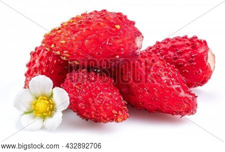 Ripe red wild strawberry with strawberries flower isolated on white background.