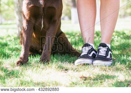 Human And Dog's Feet On Summer Grass. Photo Of Dog's Paws And Woman's Legs In Sneakers Side By Side.