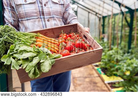 Close Up Of Senior Man Holding Box Of Home Grown Vegetables In Greenhouse