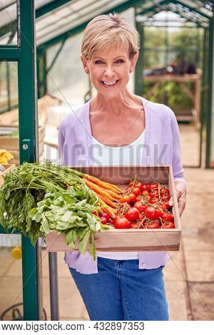 Portrait Of Senior Woman Holding Box Of Home Grown Vegetables In Greenhouse
