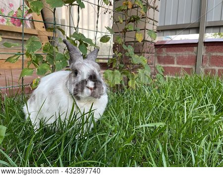 The Decorative Rabbit Sits On The Lawn Near The House. A White Rabbit Sits On A Green Lawn Near The