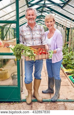Portrait Of Senior Couple Holding Box Of Home Grown Vegetables In Greenhouse