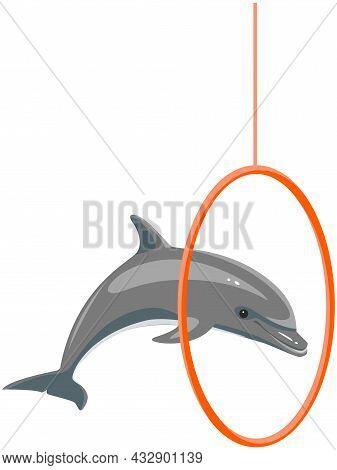 Dolphin Showing Trick, Jumping Through Hoop In Dolphinarium. Dolphin Plays, Does Trick With Equipmen