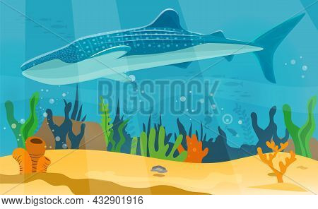 Underwater Landscape With Large Predatory Marine Fish. Whale Swimming In Ocean, Bottom Of Sea. Humpb