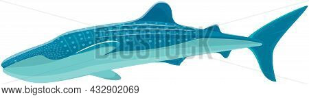 Large Predatory Marine Fish. Ravenous Animal Living In Sea Or Ocean. Whale Shark Isolated On White.