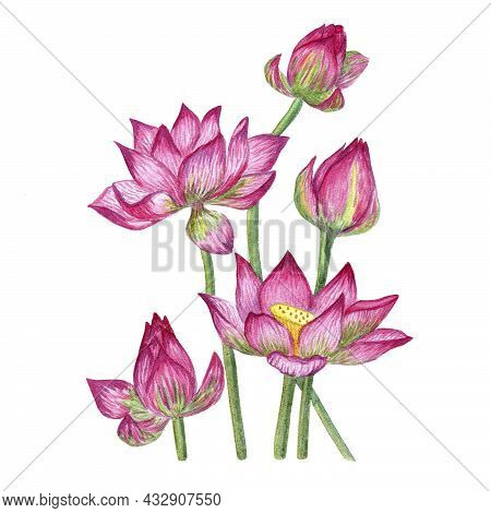 Flower Composition. Watercolor Illustration Of Lotus Flowers. Flowers For A Greeting Card. A Bouquet