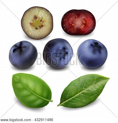 Blueberry And Huckleberry Berries Food Set Vector. Juicy Blueberry Bio Fruit And Green Leaves. Diet