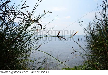 Bush On The Bank Of A Cliff Overlooking The Sea, Bush Of Grass Close-up On The Background Of The Sea
