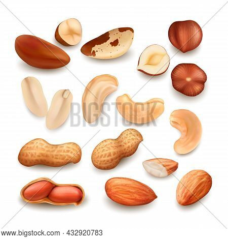 Nuts Delicious Natural Bio Nutrition Set Vector. Peanut And Brazil Nuts, Cashew And Hazelnut Fresh F