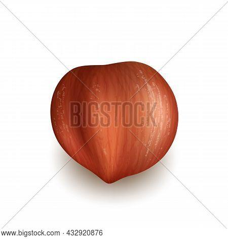 Hazelnut Natural Nut Kernel Delicious Food Vector. Hazelnut Ingredient For Baking And Cooking Confec