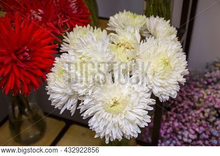 Bouquets Of Aster Flowers (lat. Aster) In White And Red On The Shelves. Flora Home Indoor Plants Flo