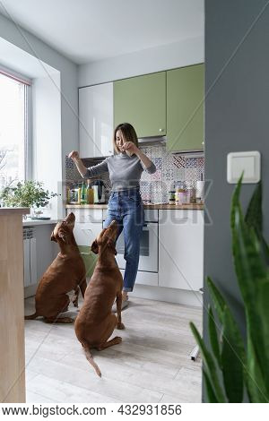 Relaxation From Communication With Dog: Adult Female, Canine Pets Owner, Relax After Work From Home