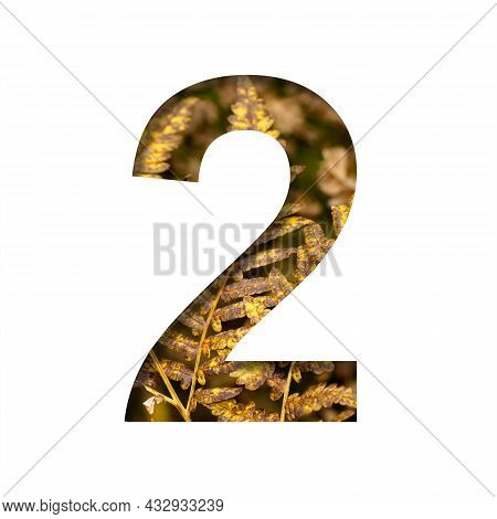 Digit Two, 2 Is Cut From White Paper With Autumn Fern Leaves Background, Late Autumn Font Or Alphabe