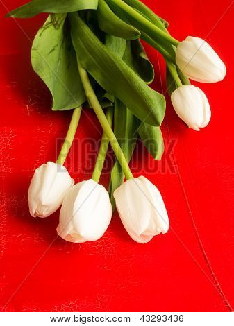 Fresh spring white tulips over red textured background