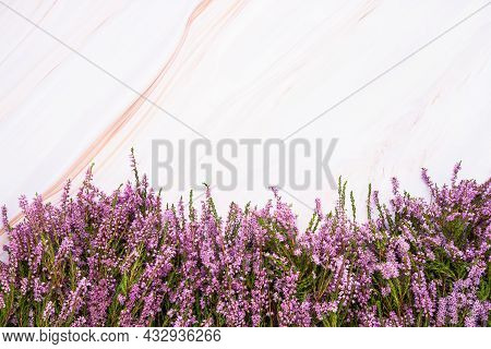 Pink Common Heather Flowers Border On Light Marble Background. Copy Space, Flat Lay, Selective Focus