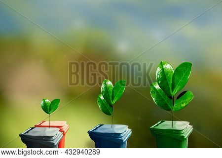 Green Plant Sprouts On Garbage Containers For Separate Garbage Collection. Selection Garbage For Rec