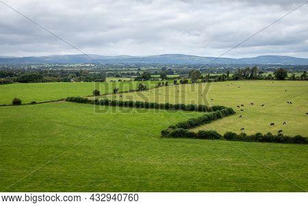 Zigzag Hedge On Cahsel Farmland, County Tipperary