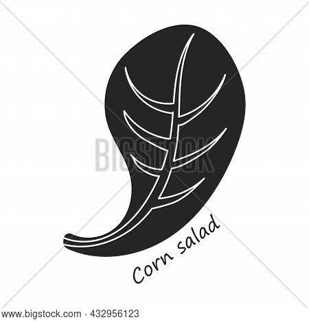 Lettuce And Salad Black Vector Of Icon.black Vector Illustration Leaf Of Lettuce. Isolated Illustrat
