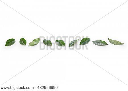 tea leaves line banner design