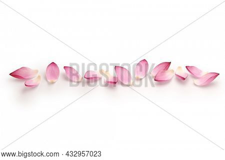 lotus flower petals line design