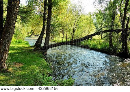 A Leaning Tree Over The Bed Of A Turbulent River Flowing Through The Morning Forest.