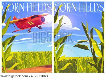 Corn Fields Posters With Red Airplane And Green Cereal Plants. Vector Cartoon Banners With Agricultu
