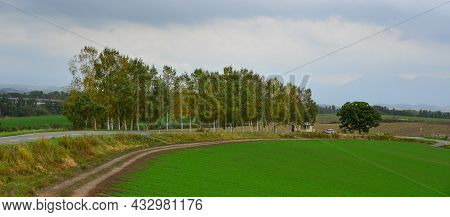 Rural Scenery Of Furano, Japan