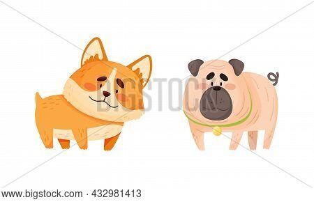 Funny Pug And Corgi Dog With Collar As Four-legged Friend And Domestic Pet Vector Set