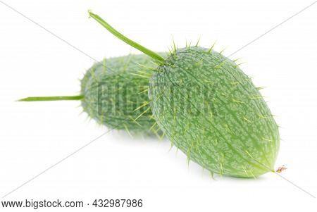 Ecballium Isolated On White Background. Ecballium Elaterium Or Wild Cucumber Pods