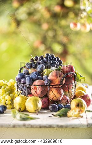 Assortment Of Fresh Fruits On A Garden Table In A Wire Basket.