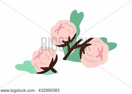 Soft Buds Of Blossomed Cotton Flowers With Leaf. Botanical Composition With Delicate Fluffy Coton Bo