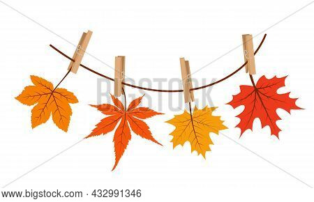 Maple Leaves Hanging On The Rope Attached With Clothespin. Vector Illustration.