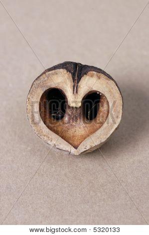 Heart Nut Interior