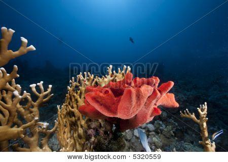 ocean sun and sponge taken in the red sea. poster
