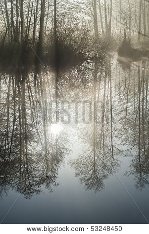 Trees Reflected In Still, Misty Lake.