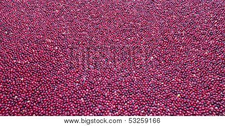 Cranberry Bog Wallpaper